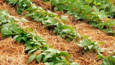 mulč / ekologické zemědělství