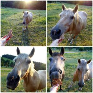 lembas koně