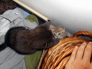 Miluna & Iči kids. Jejich první setkání.