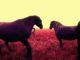 fialoví koně na růžové trávě / fotoobraz / recenze saal digital