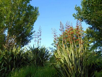 novy-zeland-coromandel-town (