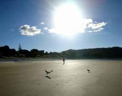 plaz-whangapaoa-coromandel-novy-zeland