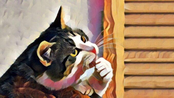 thinking cat hoshie