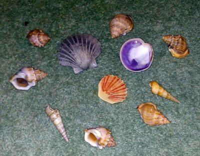 novy-zeland-tauranga-prace-v-balirne-working-holiday