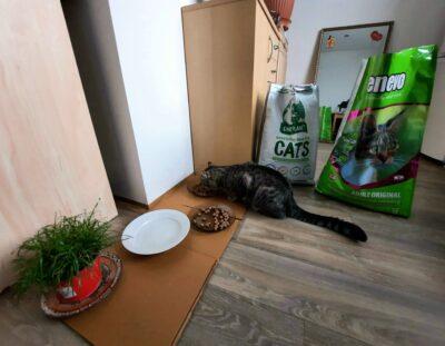veganské-granule-pro-kočky-benevo-ami cat